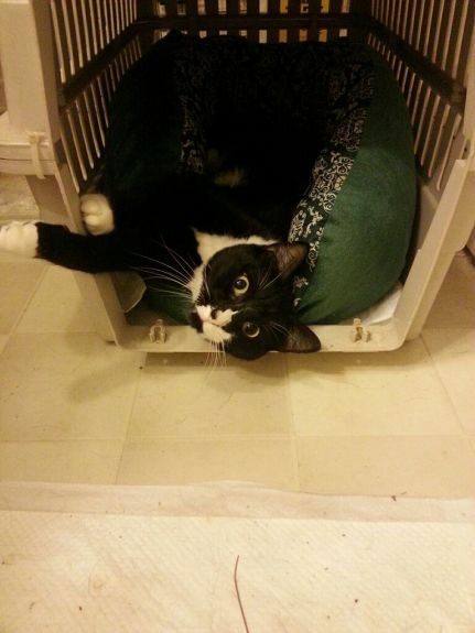 Jet in crate